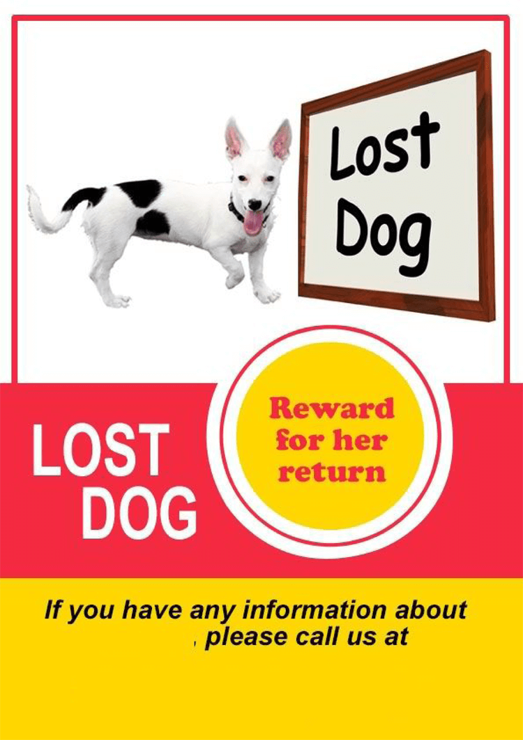 20  lost cat    dog flyer  u0026 poster templates  for microsoft