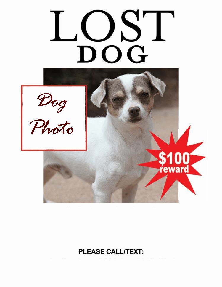 Lost-Dog-Flyer-Template-11
