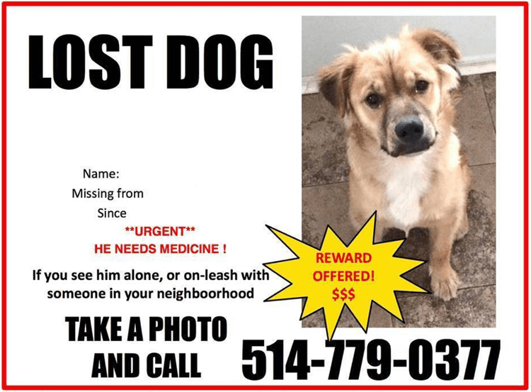 Lost-Dog-Flyer-Template-7.