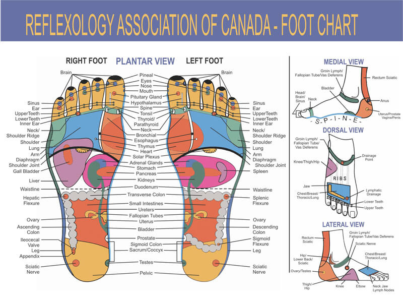 Free Foot Reflexology Chart 01