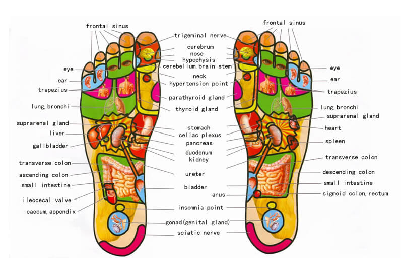 Free Foot Reflexology Chart 03