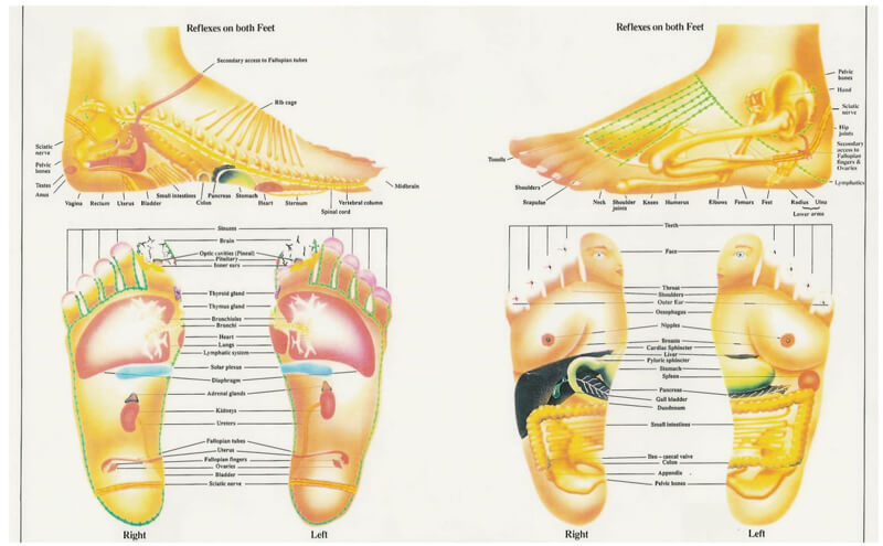 Free Foot Reflexology Chart 09
