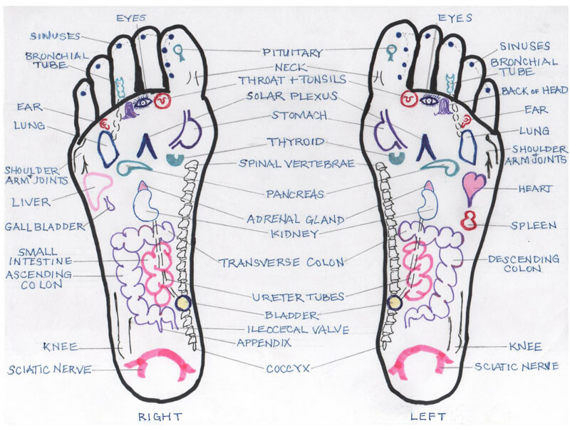 Free Foot Reflexology Chart 13