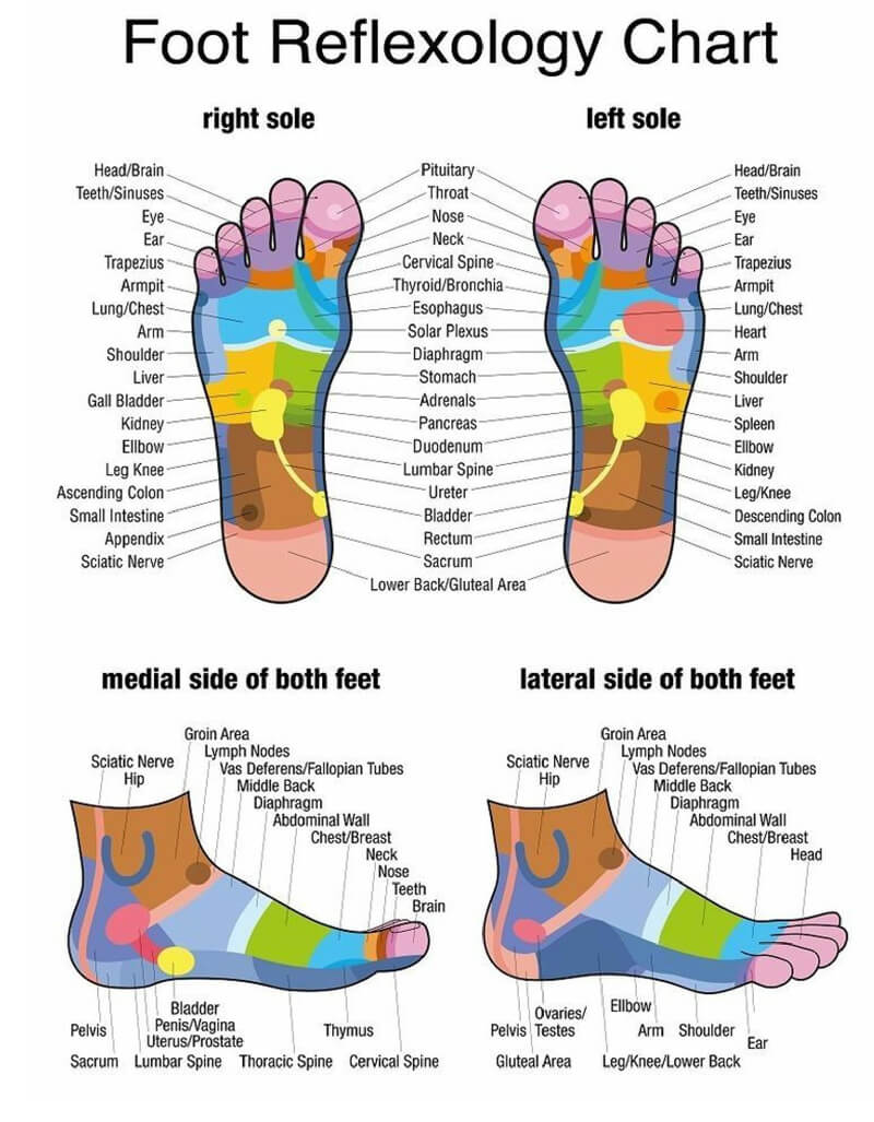 Free Foot Reflexology Chart 15