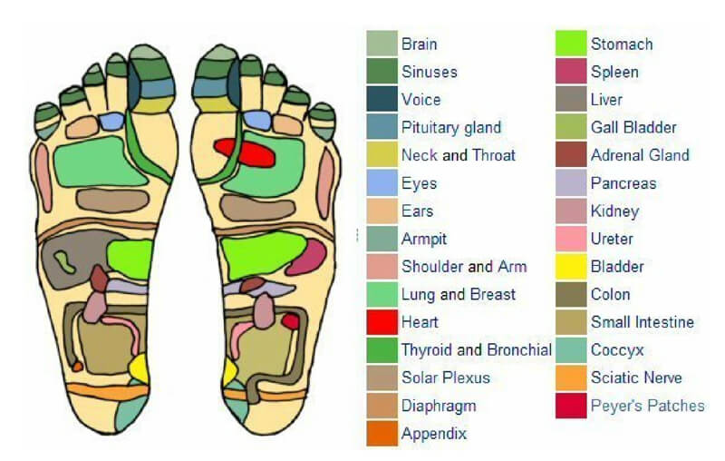 Free Foot Reflexology Chart 19