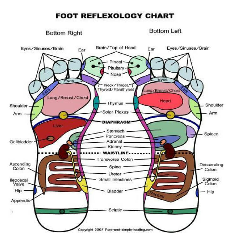 Free Foot Reflexology Chart 22