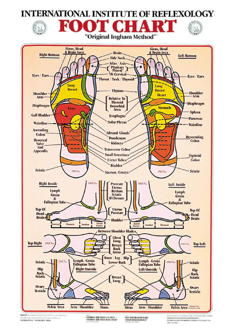 Free Foot Reflexology Chart 24