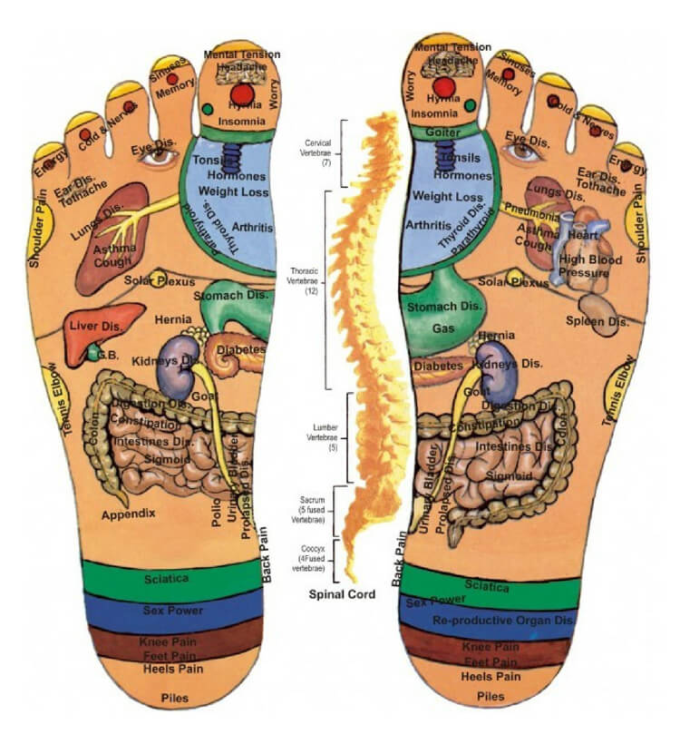 Free Foot Reflexology Chart 26