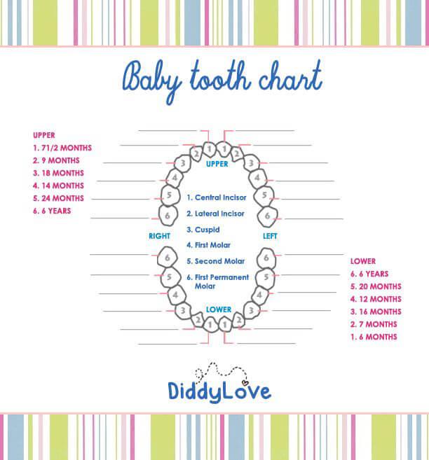 Baby Teeth Chart 01