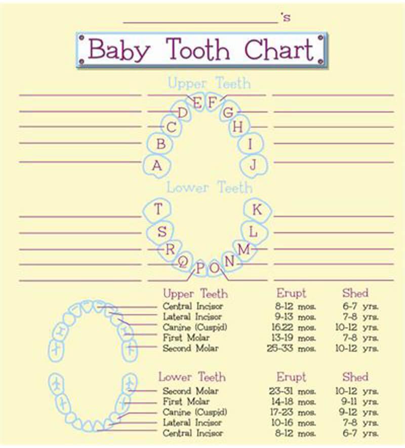 Baby Teeth Chart 03