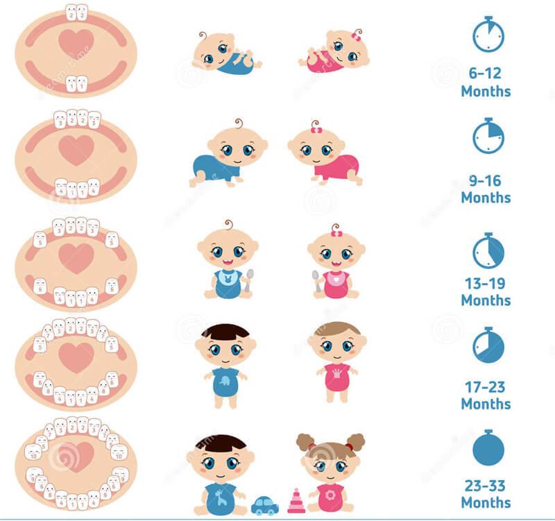 Baby Teeth Chart 08