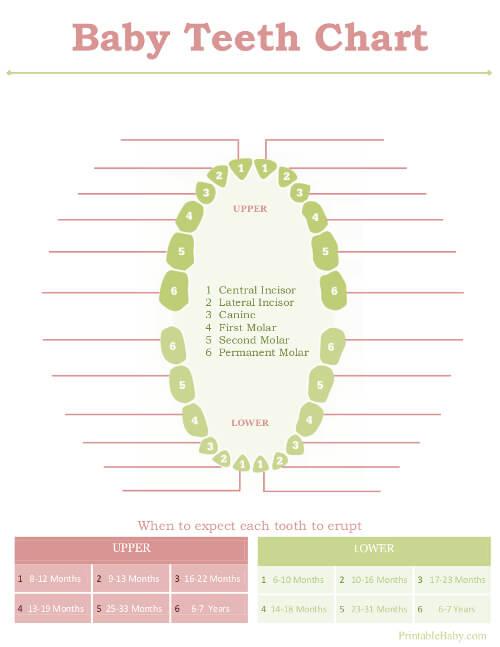 Baby Teeth Chart 11