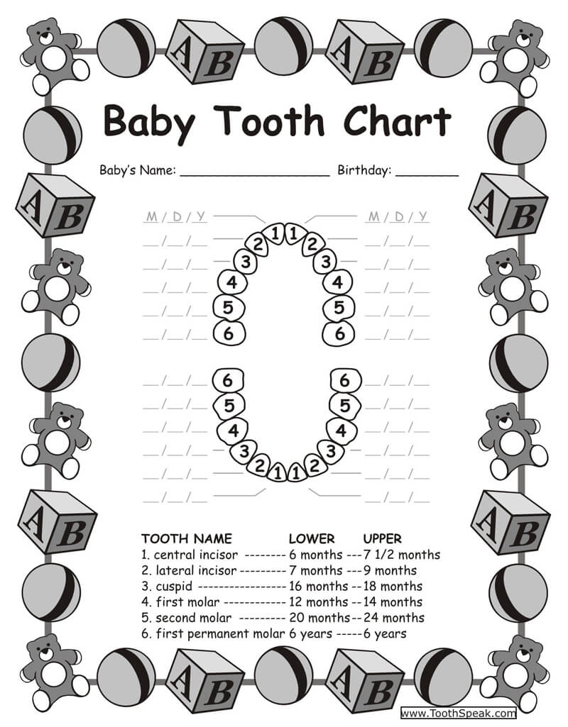 Baby Teeth Chart PDF