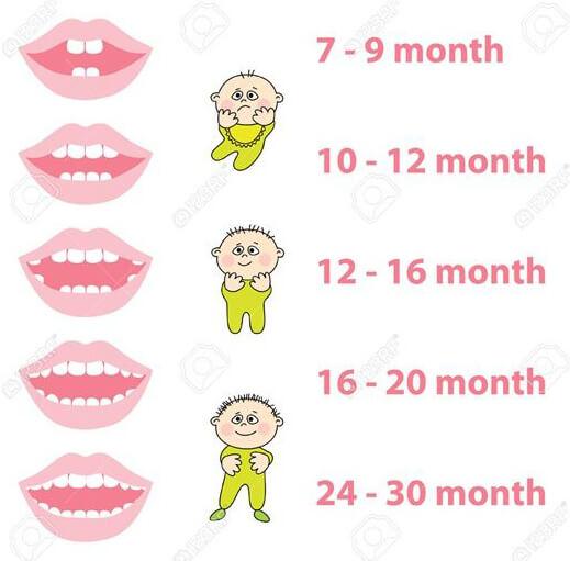 Baby Teeth Eruption Chart 01
