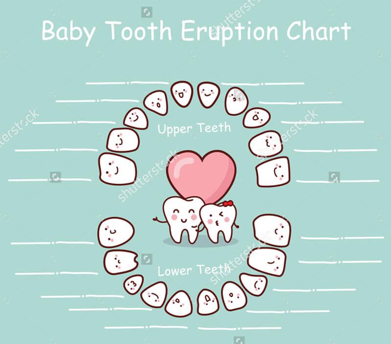 Baby Teeth Eruption Chart 05