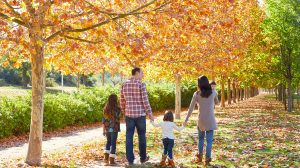 Free Family Tree and Chart Templates