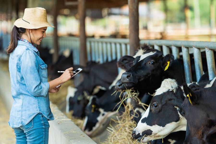 livestock bill form