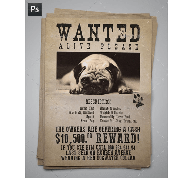 Lost Cat / Dog Flyer & Poster 15
